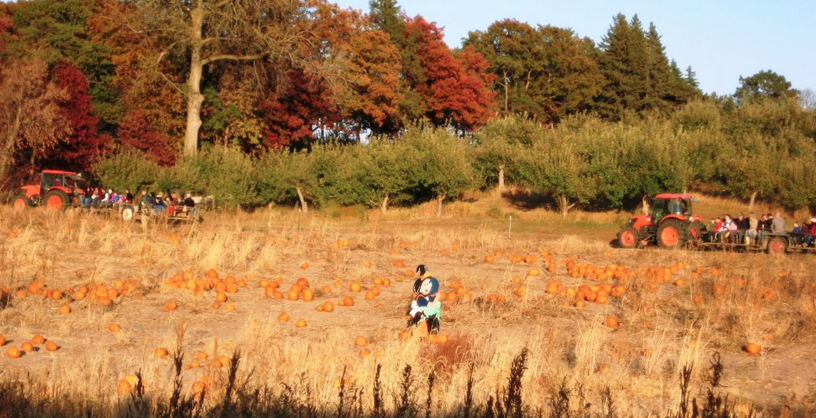 Pine Tree Apple Orchard - Pumpkins - Pumpkin Patch