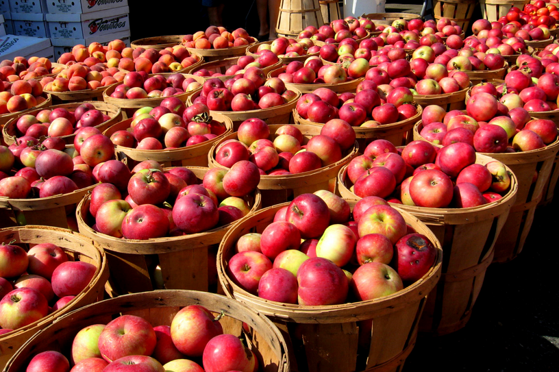 Apple Harvest 2013 - Minnesota