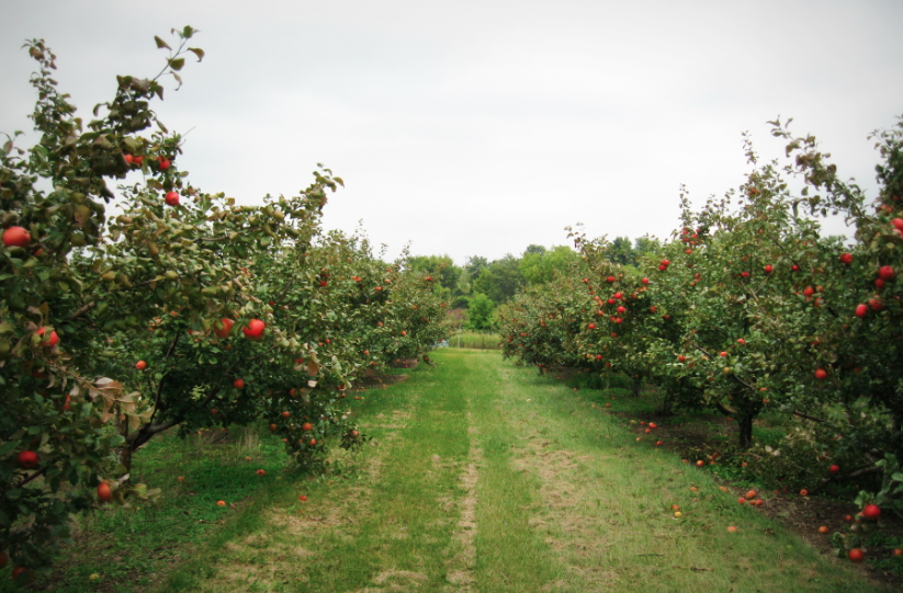 Apple Jack Orchard - Apple Trees