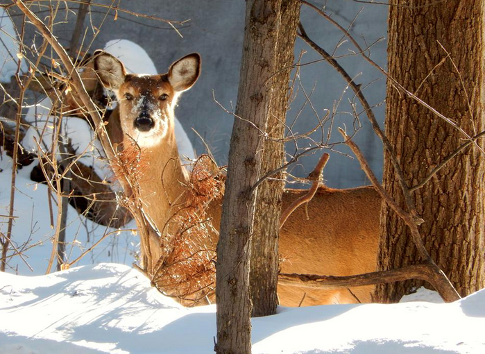Both Roth - Photography - Nature - Mounds Park - Deer - Minnesota Connected - 2014