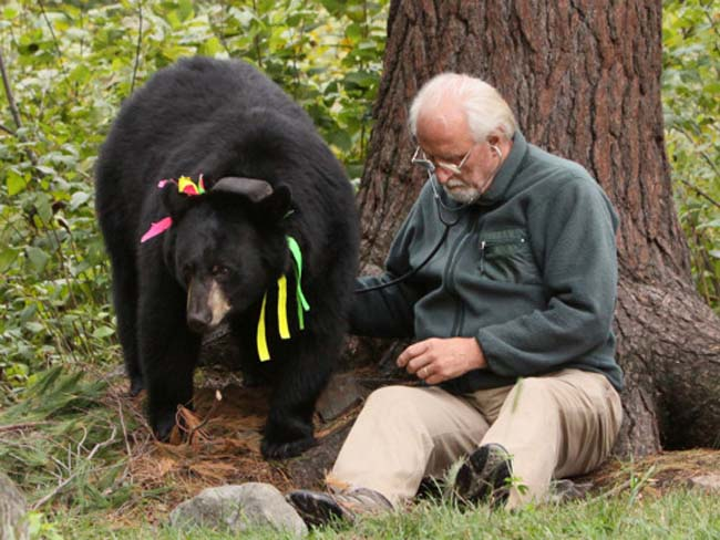 dr lynn rogers - bear research - bear controversy - 2014