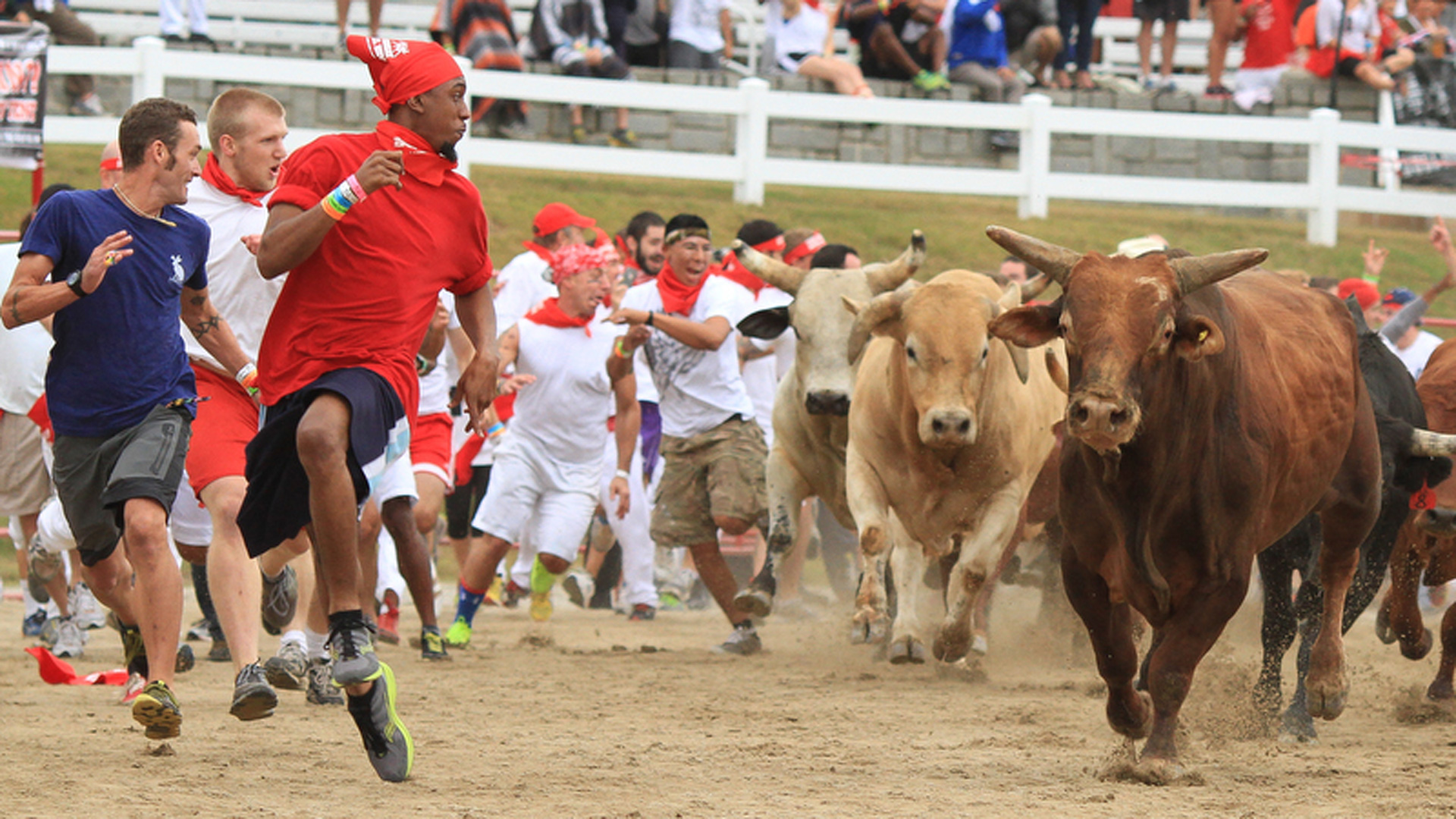 running of the bulls essay The san fermin festivaland the running of the bullsthe san fermin festival in pamplona, spain, has been celebrated for centuries the festival honors san fermin the festival itself is exciting, however, the focal point of the festival is the running o.