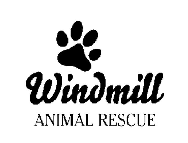 windmill animal rescue - lonsdale