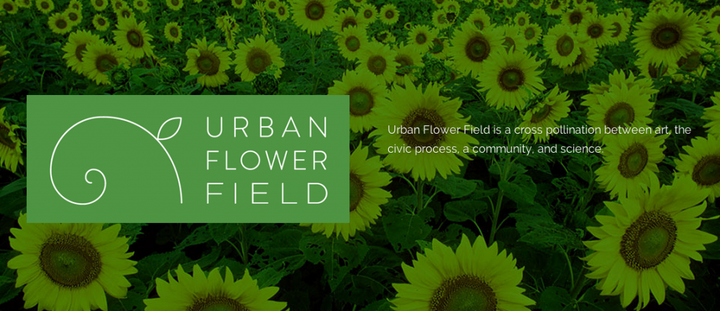 urban flower field - st paul