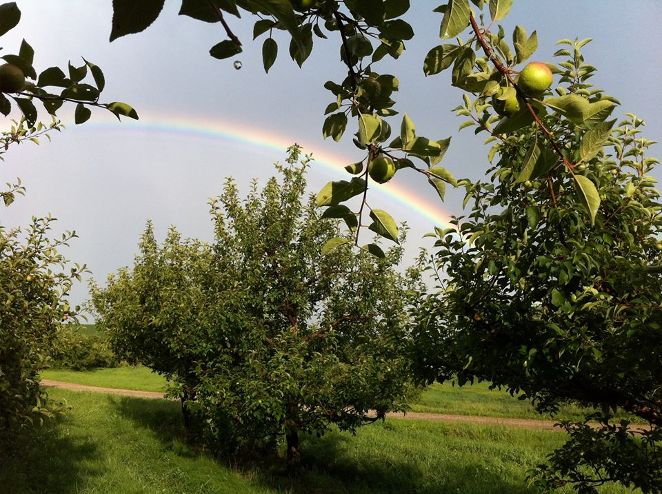 Nelson's Apple Farm Orchard and Rainbow